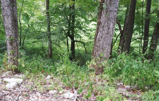 Large secluded campsite surrounded by woods in Bedford, IN
