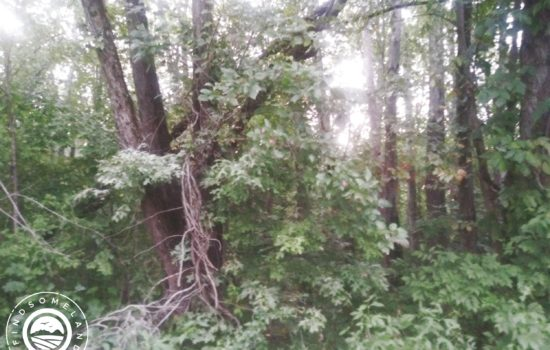 0.35 acre wooded city lot in Jasonville, IN – All utilities available!