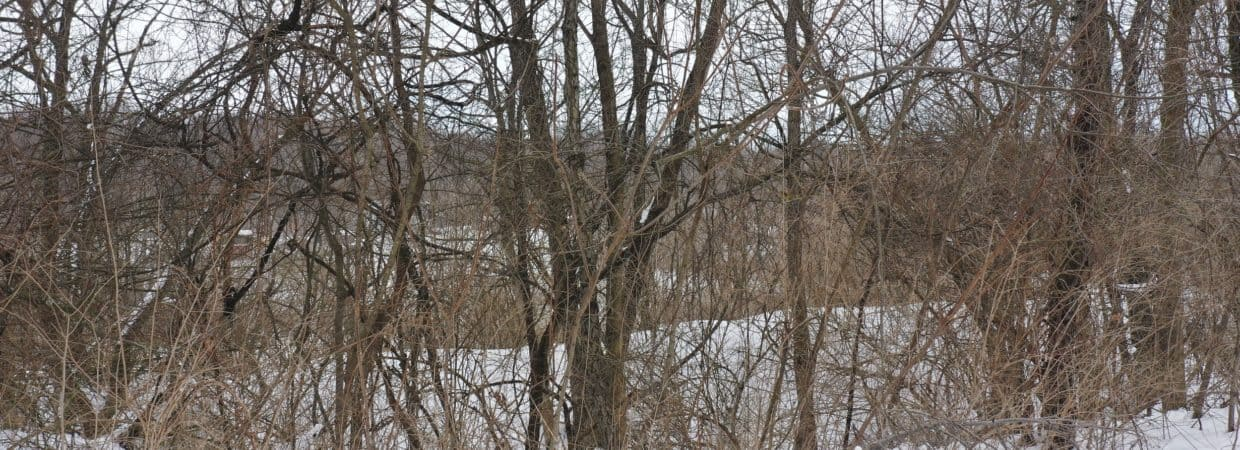 2.80- Acre Treed Residential Property in South Bend, IN! Only 146/Month!